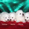 donik-style-kennel-japanese-spitz-p 4
